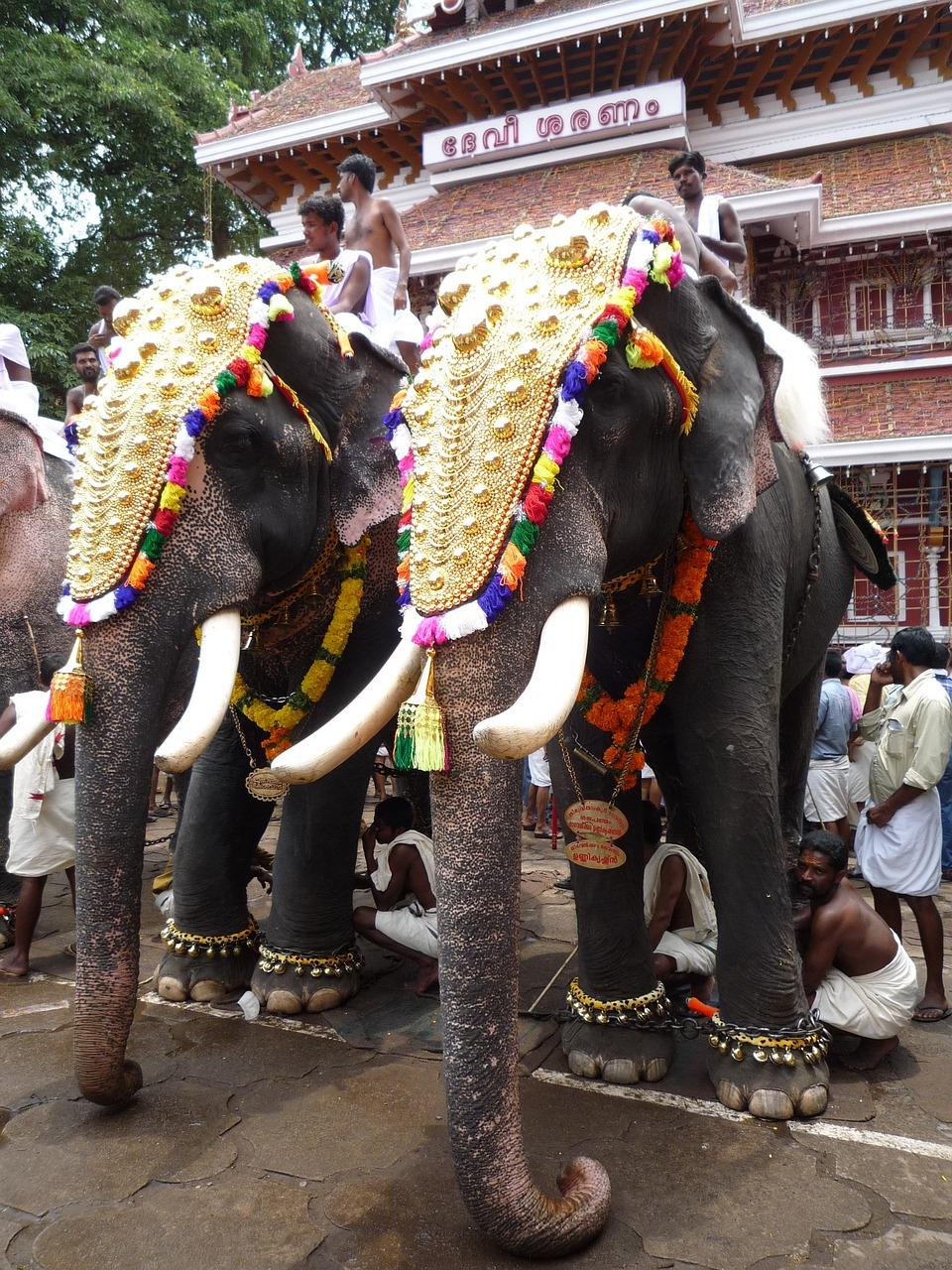 elephants-743304_1280