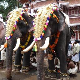 The Elephant a.k.a Hathi