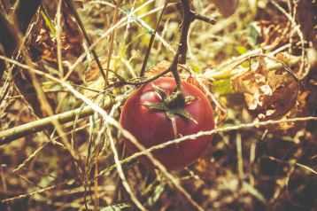 Photo by Andrii Nikolaienko on Pexels.com